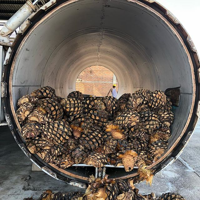 There is nothing like the smell of fresh baked agave. #agave #agavelove . . . #jalisco #tequila #highlights #craft #crafttequila #craftspirits #drinks #imbibe #thirsty #smallbatch #copperstill