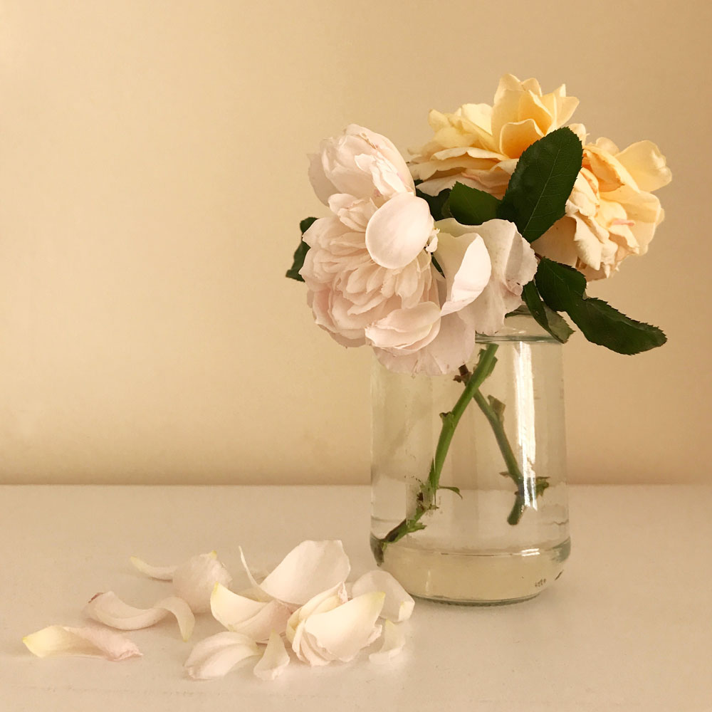 Simple Peach (Harkness Roses) and Generous Gardener (David Austin Roses) cuttings from my garden. Photo © Zarina Holmes