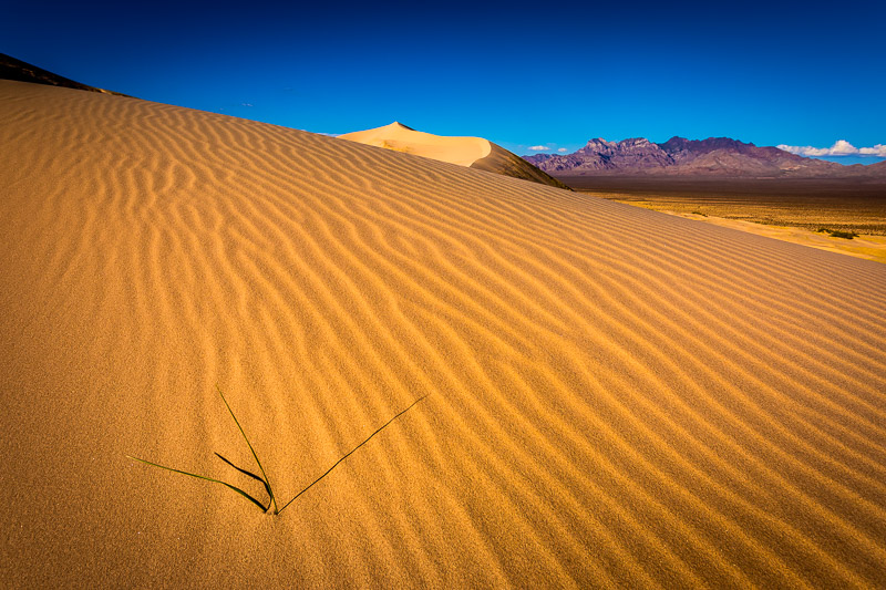 Kelso Sand Dunes in Mojave National Preserve