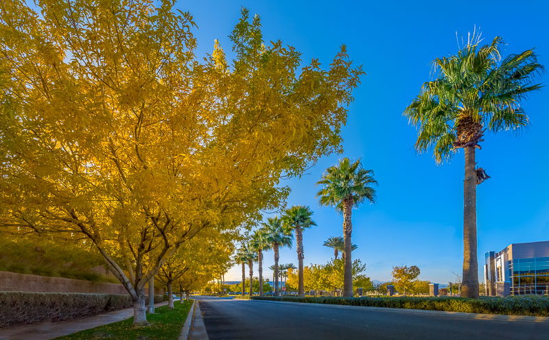 Fall in Las Vegas