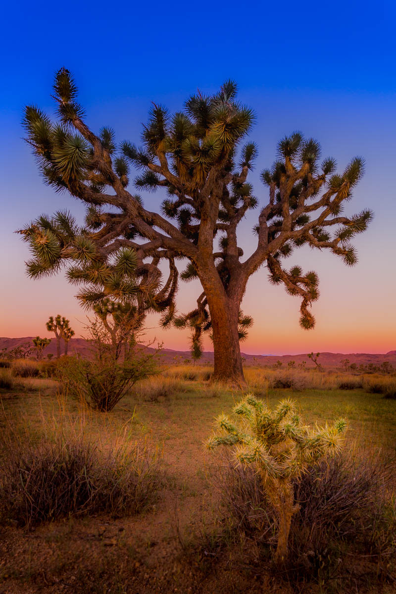Joshua Tree Painting