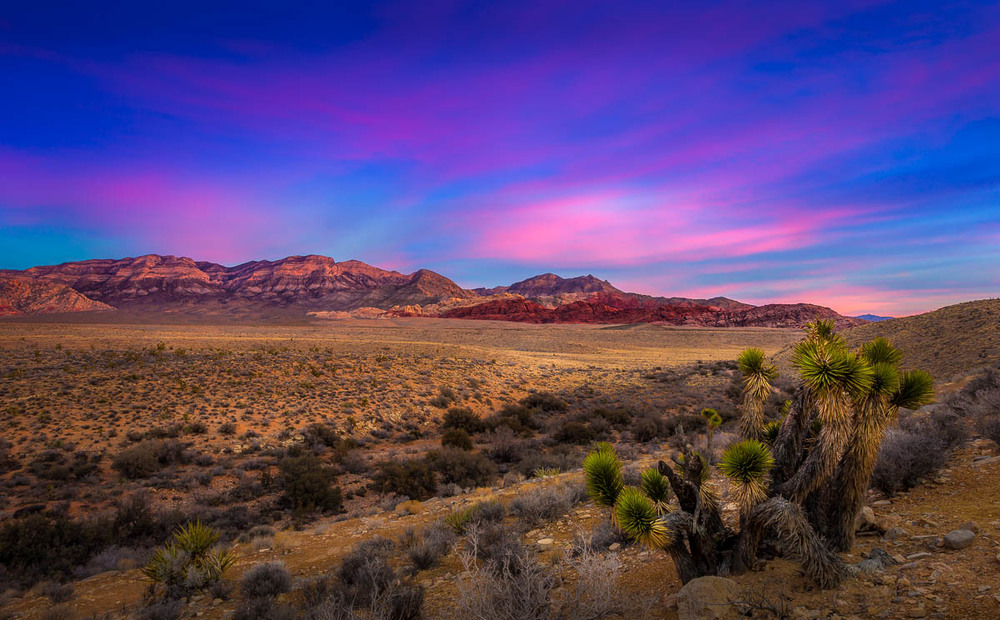 Cotton Candy Morning Sunrise Red Rock National Conservation Area.jpg