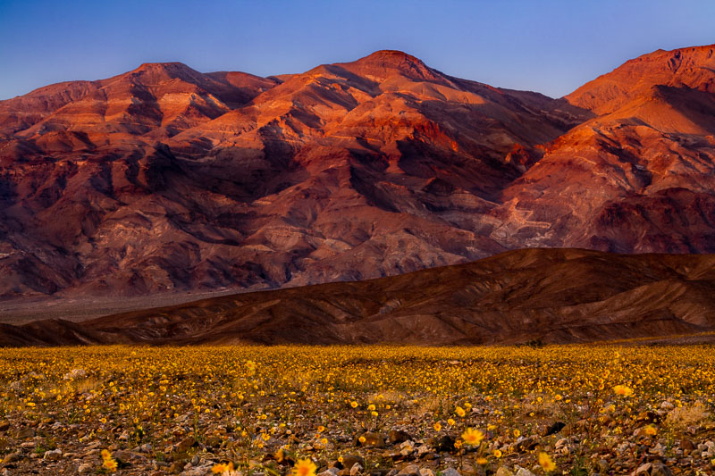 Super Bloom, Death Valley National Park