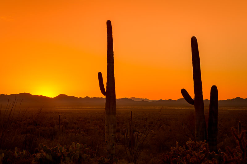 Good Night Saguaros, Saguaro National Park