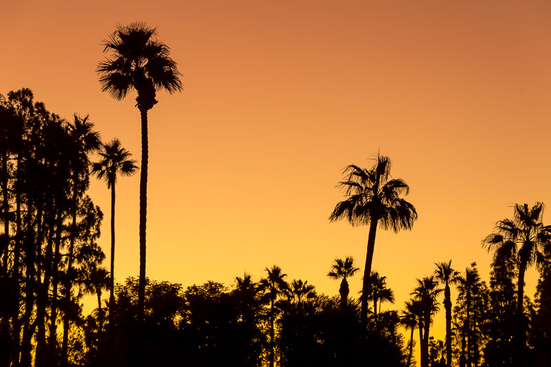 Palm Tree Silhouette, Palm Springs, CA