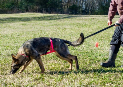 Biothane Tracking Bottcher Harness — High In Trial Canine Equipt