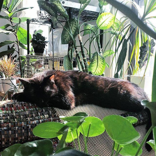 #junglebeast #sunnaps