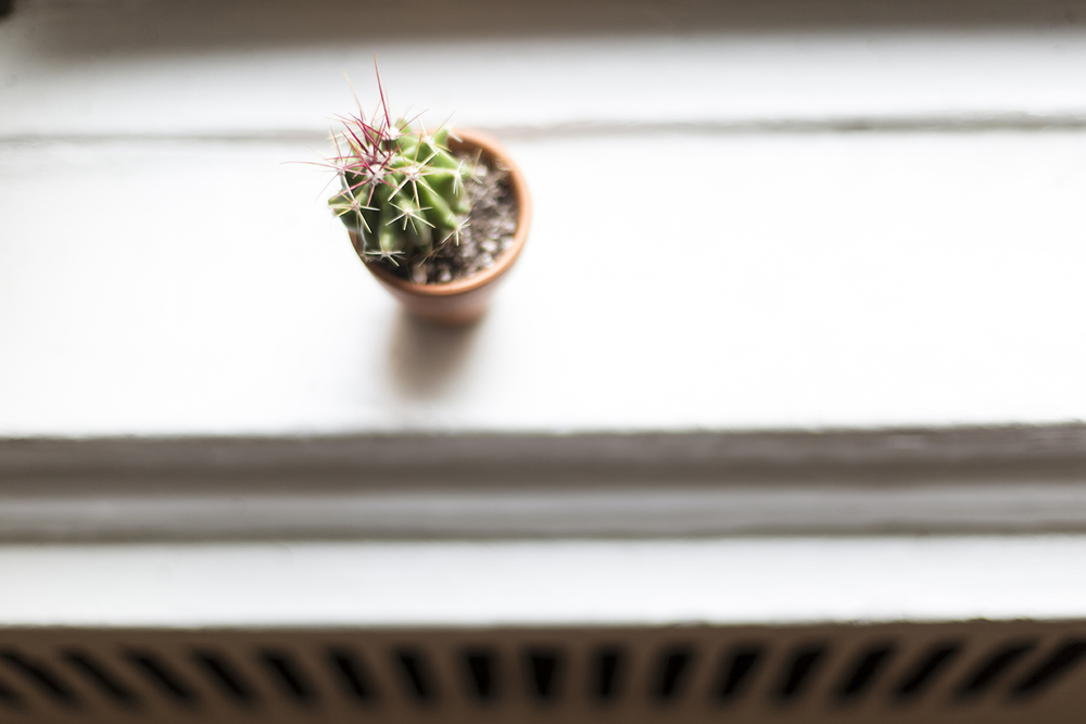 """I recently got a succulent from my co-worker  Julee Wilson , and I decided to put it in my windowsill. My sister works in a floral shop and when she came over she, of course, wanted to talk about the plant. 'This soil is way too dry,' she said after I smugly said, 'Oh they don't need much care, maybe I'll water it like once a month.' She proceeded to get some water and carefully water the plant. 'Water it at least once every two weeks,' she instructed. And then I complained about it being lopsided and was about to move it when she said, 'Um, succulents tend to do better just the way they are, so don't move it.' A lesson in Succulents 101 -- apparently they do need some TLC. (Watch it die on my watch.) """