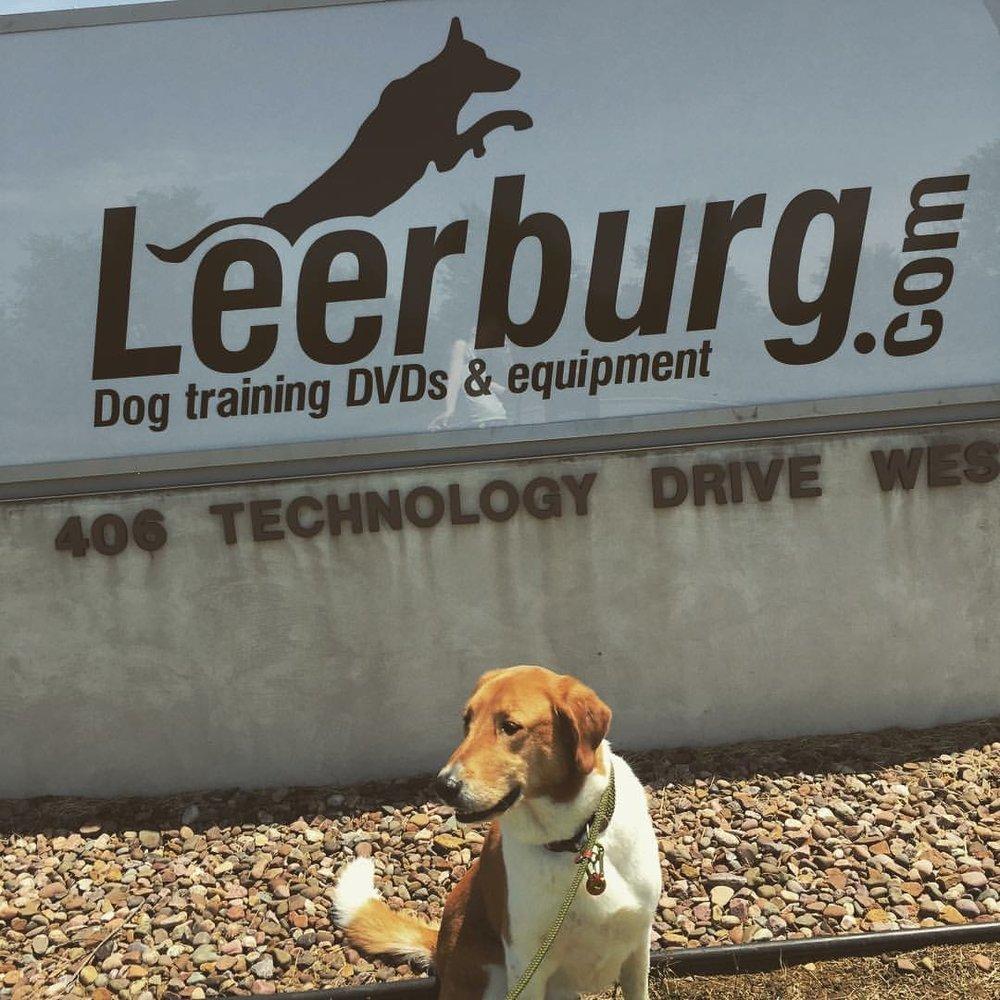 Izzie's dog Zee posing at Leerburg HQ in Menomonie, Wisconsin - 2016