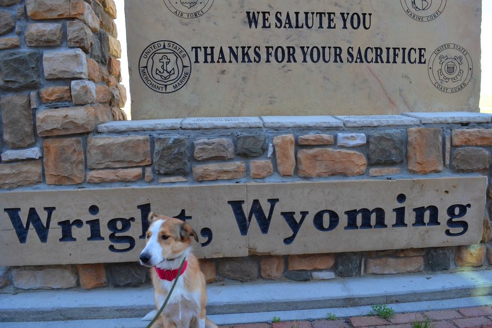 Izzie's dog Millie at a pitstop in Wyoming on the way to Colorado -2016