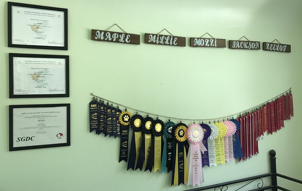 Izzie's Dog's titles and accomplishments in their sport training.