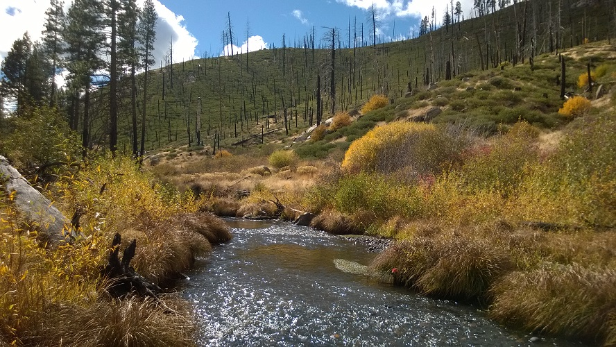 Indian Creek below Antelope Lake; the fall splendor is made more remarkable by the contrast with the burn scars of the Antelope Complex Fire.