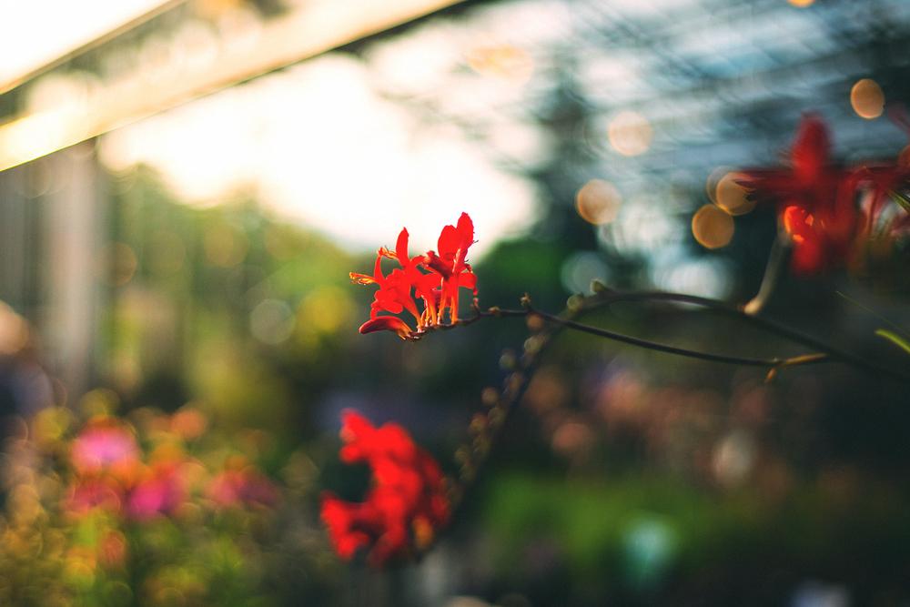 Perennials_color_northwest_gardeningF1