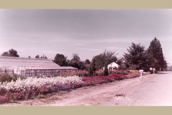 Today Swansons Nursery is still located at the original site on 15th Avenue NW, which was an unpaved rural road in 1924.