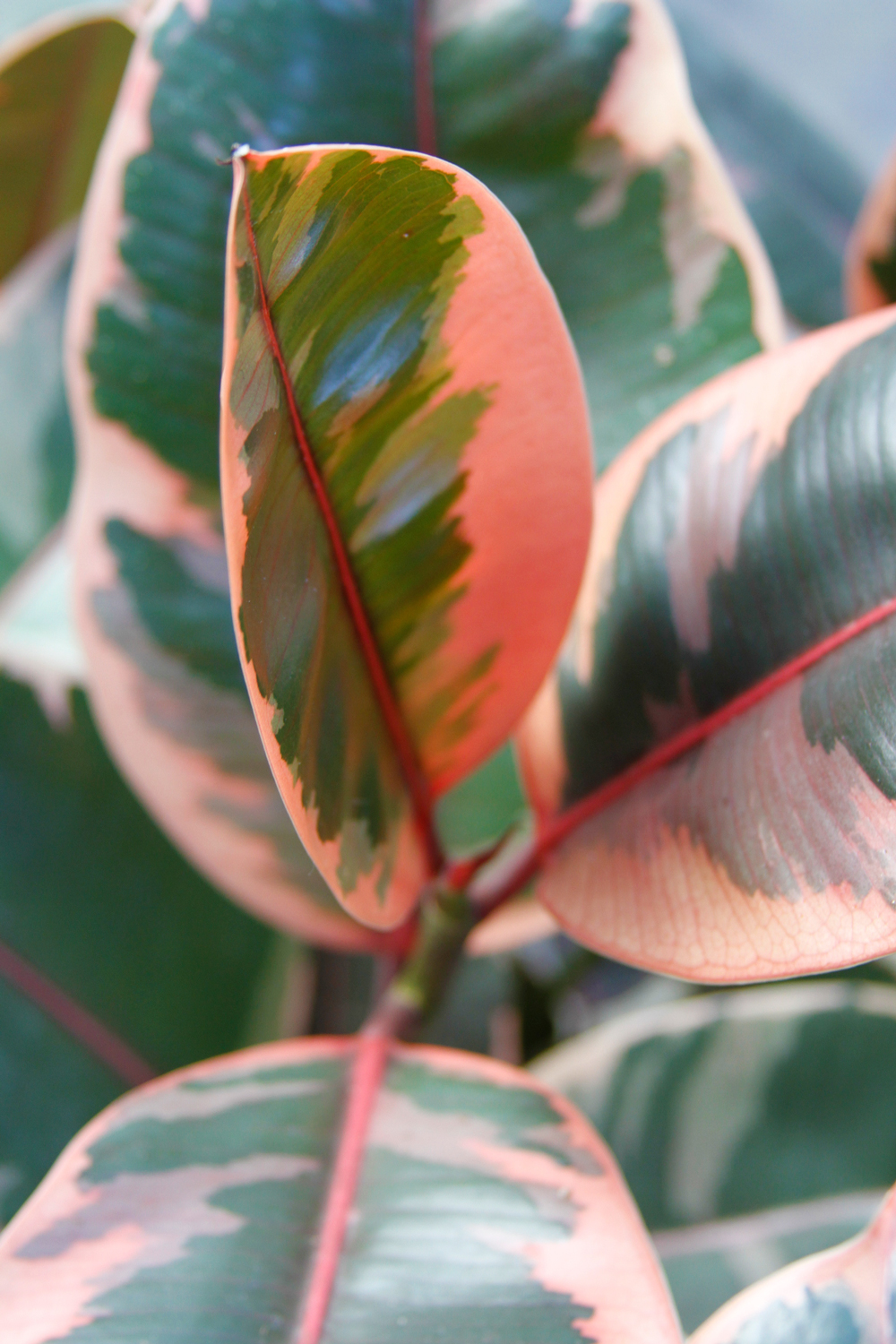 multicolored leaves