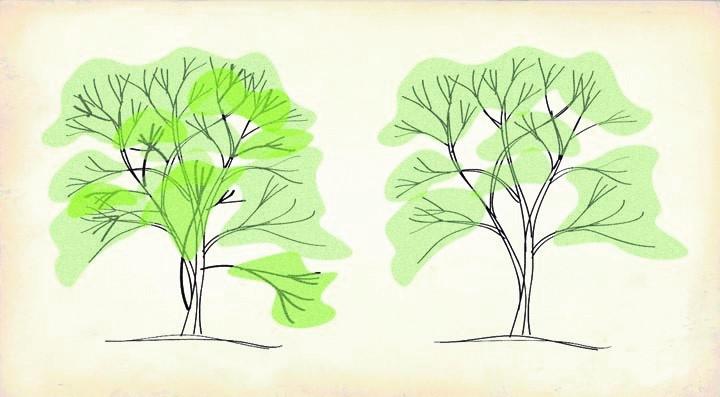 Color pruning diagram