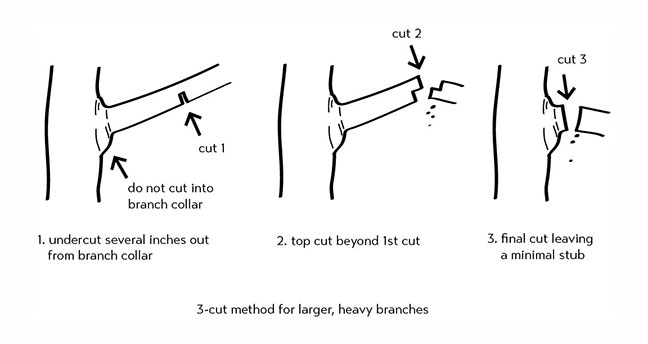 Image result for 3 cut branch collar