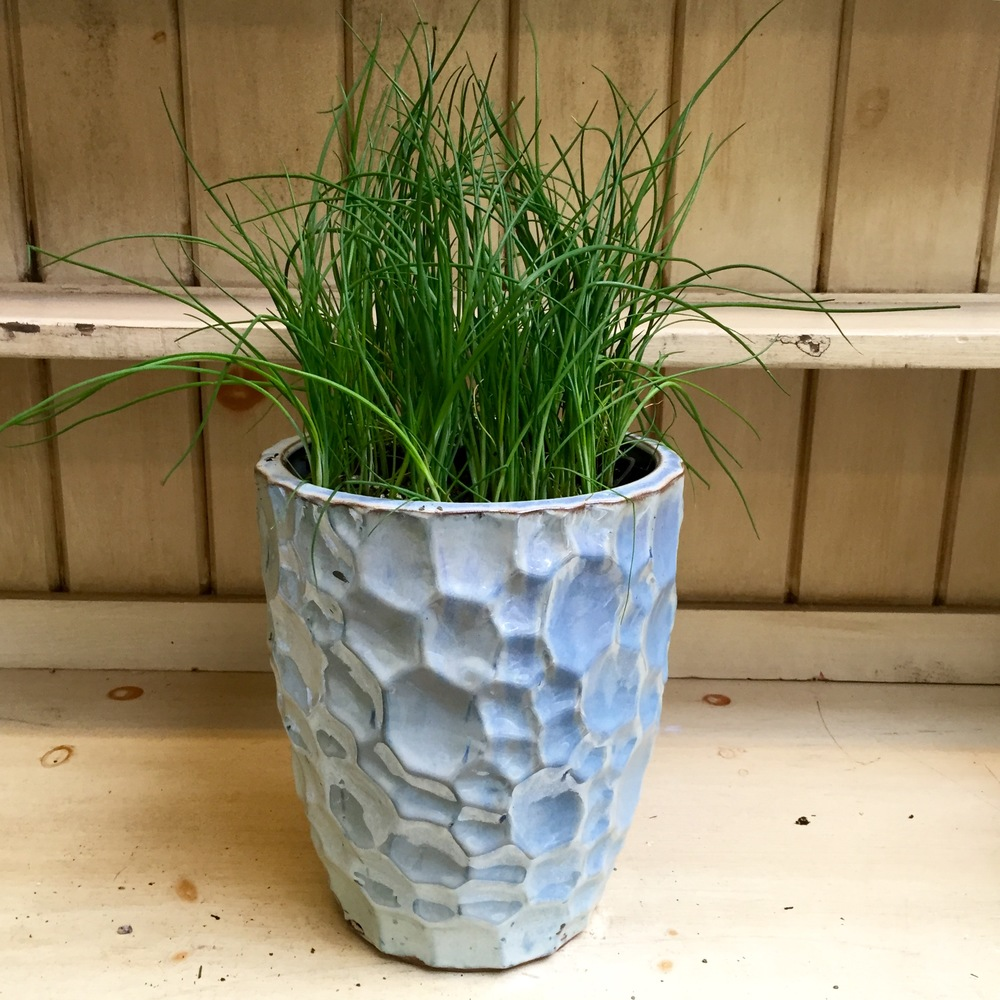 Pictured: Common Chives