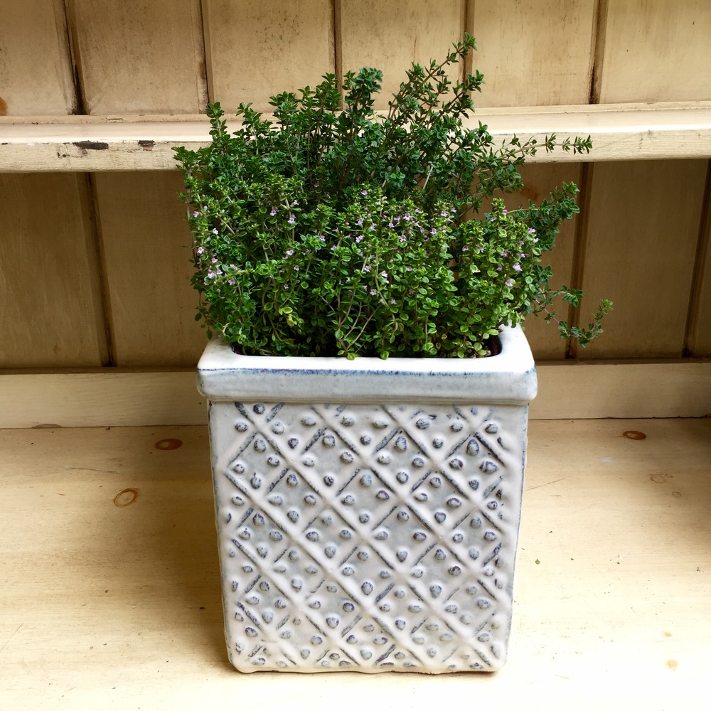 Pictured: Dot Wells French Thyme and Gold Lemon Thyme