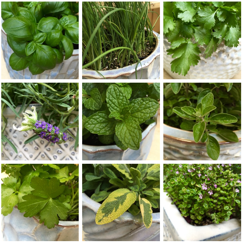 You Donu0027t Need An Abundance Of Yard And Garden Space To Grow A Useful Herb  Garden. There Are Many Herbs That Can Flourish On Your Deck, Patio, ...
