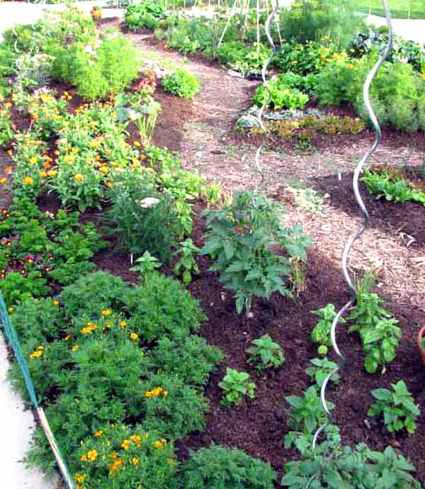 Mulch can enhance your vegetable garden, protecting roots and keeping moisture in the soil. credit: University of Minnesota Extension