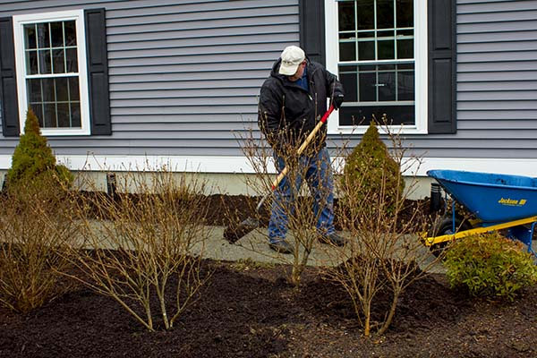 Laying mulch in shrub beds. credit: homeconstructionimprovement.com