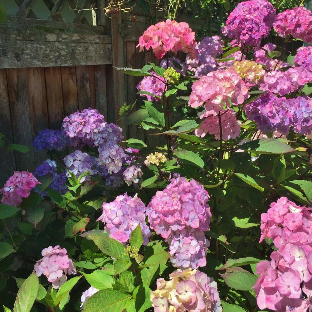 Garden8 (8).jpg
