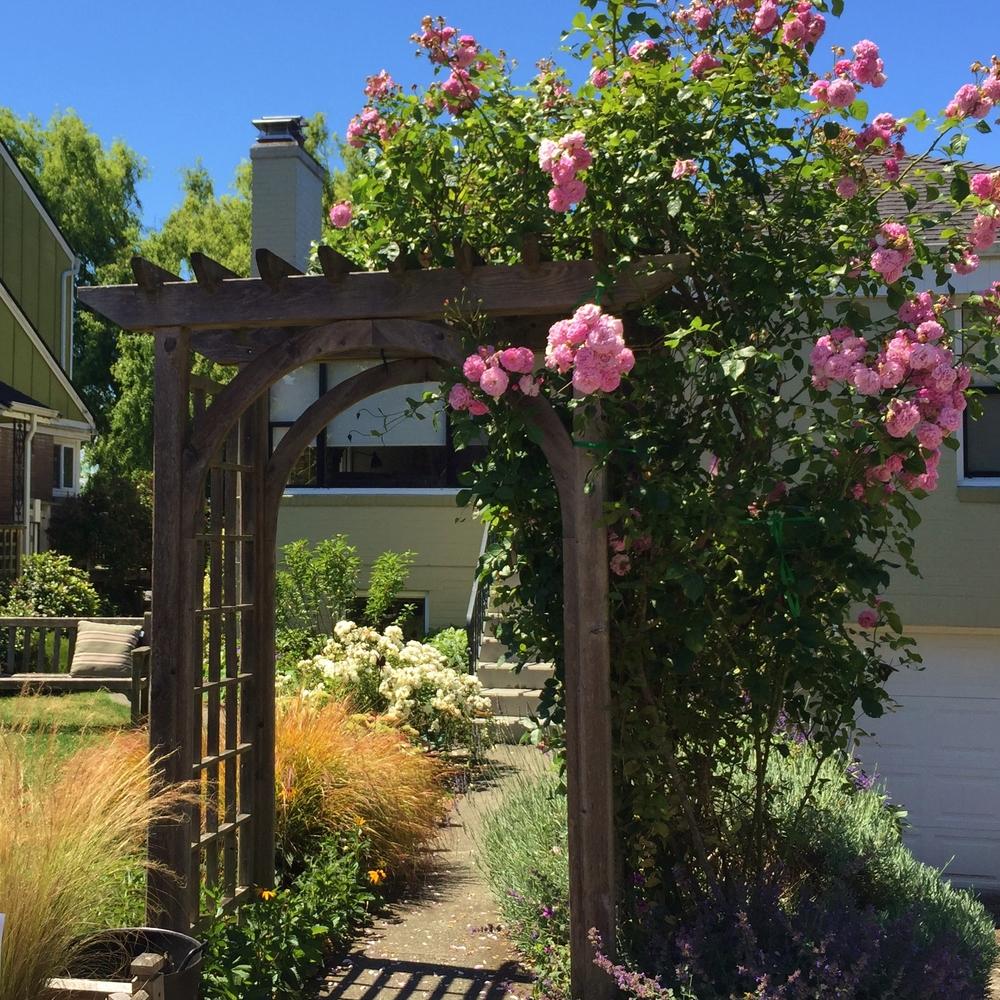 Garden8 (2).jpg