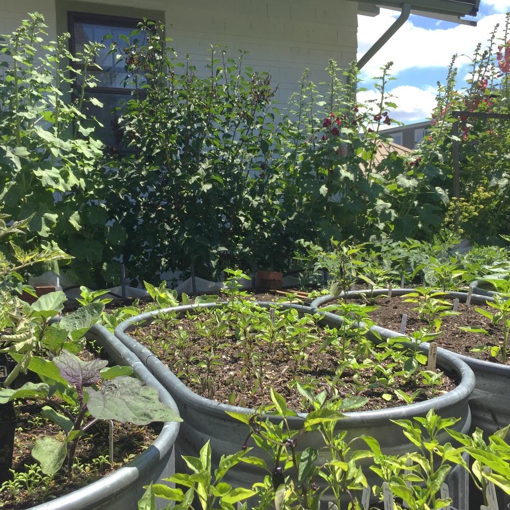 Garden6 (3).jpg