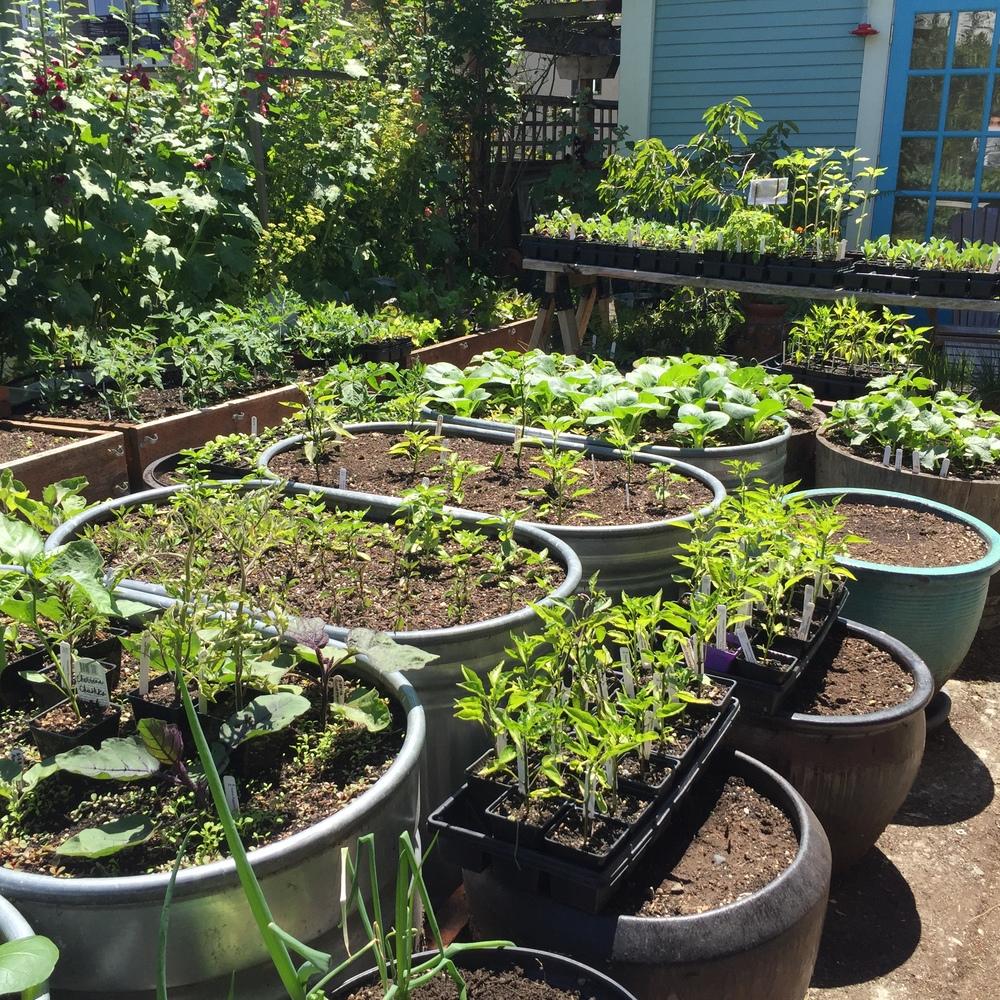 Garden6 (2).jpg