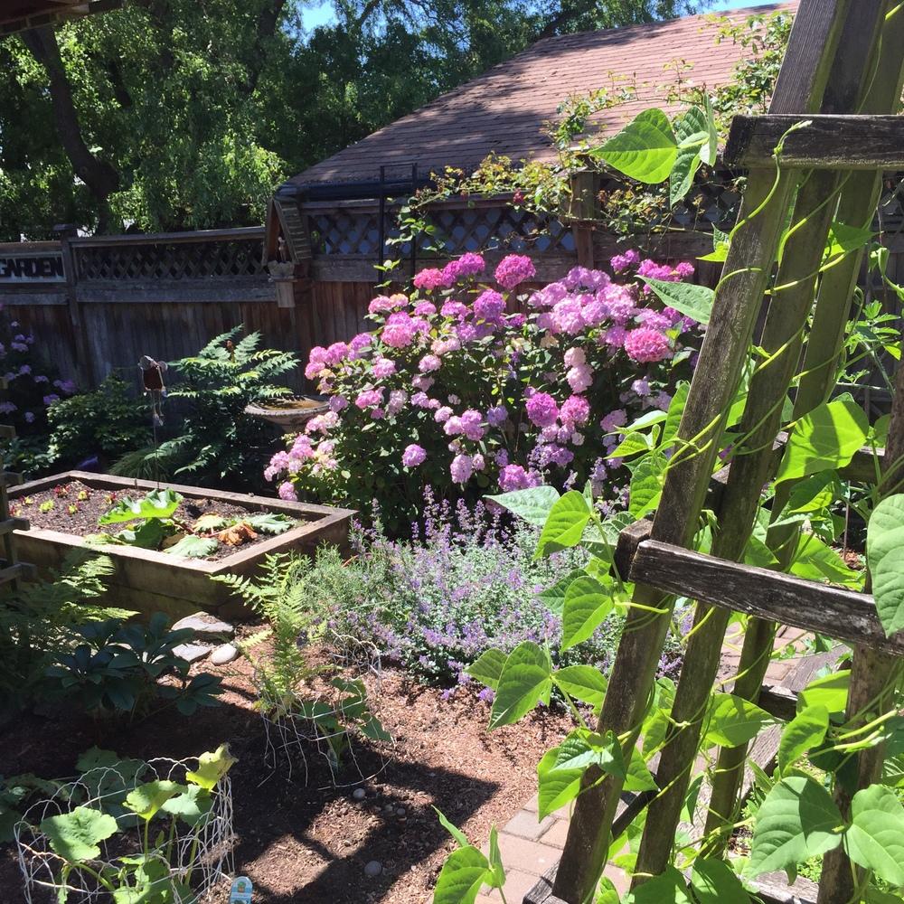 Garden8 (5).jpg