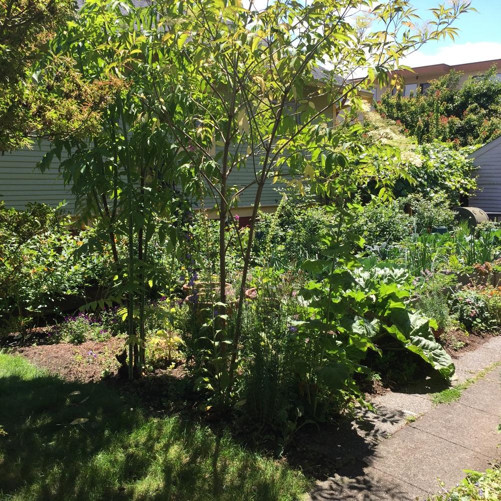 Garden14 (3).jpg
