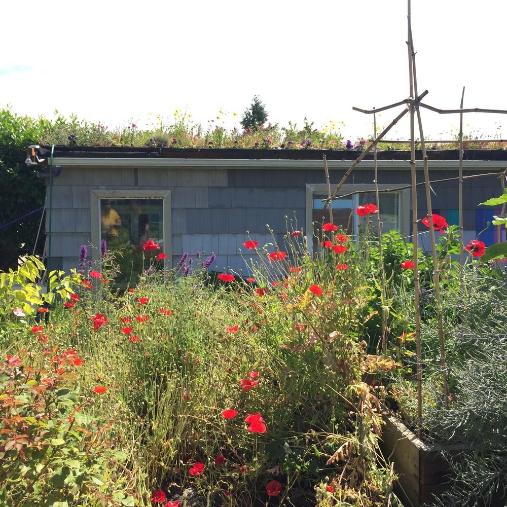 Garden5 (6).jpg
