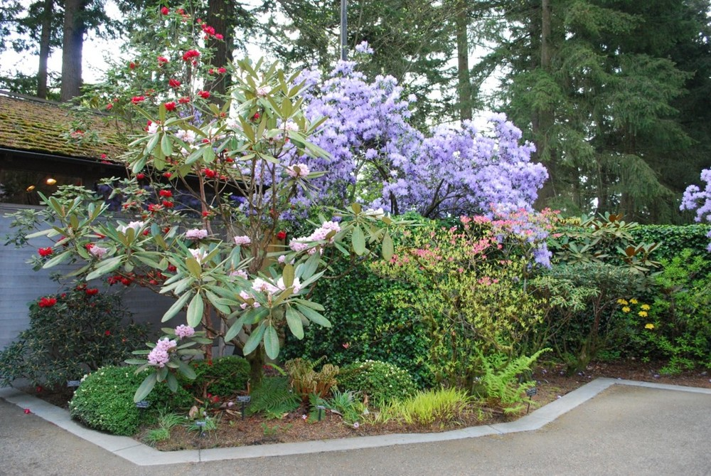The Rhododendron Species Foundation Garden Is Designed Primarily Around The  Botanical Collection. Unlike Many Other Public Gardens, This One Is  Designed By ...