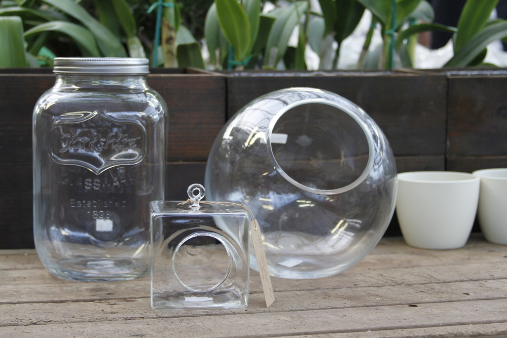 Step 1: Choose your plants & container - Create An Amazing Terrarium — Swansons Nursery - Seattle's