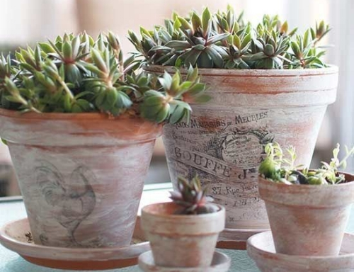 "Succulents in ""Antique"" Terracotta pots Photo:  pinterest.com"