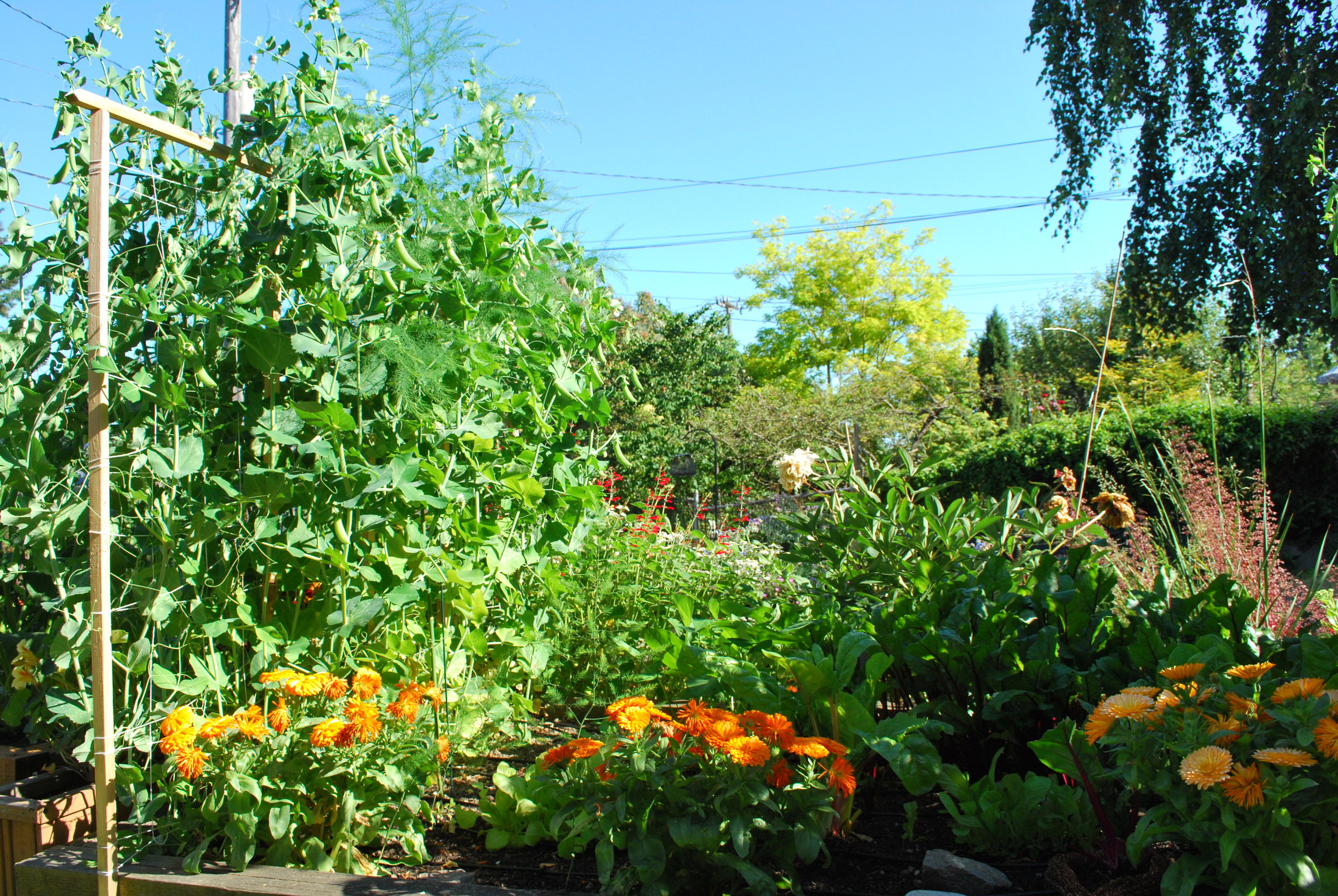 The Secrets Of Companion Planting Swansons Nursery Seattle S