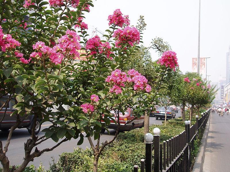 photo: Wikimedia Commons, Fanghong
