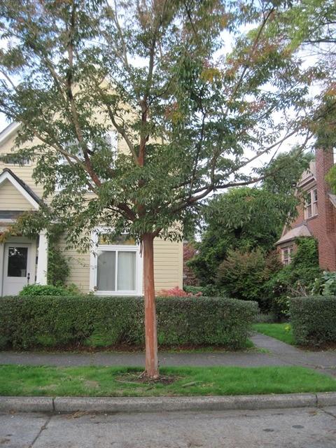 Small Trees -