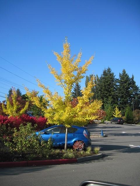 Large Trees -