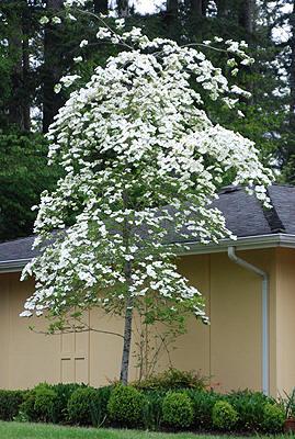 Medium Trees -
