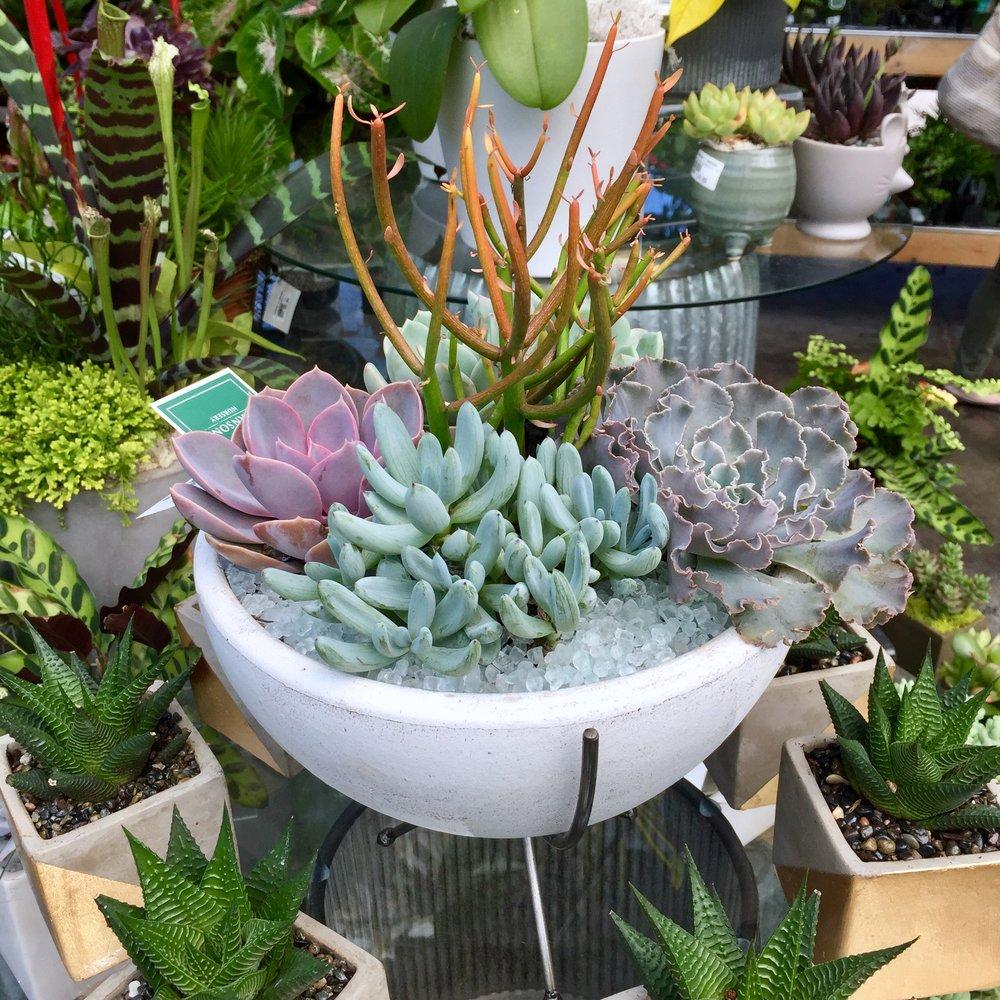 Mollie's Succulent container.jpeg