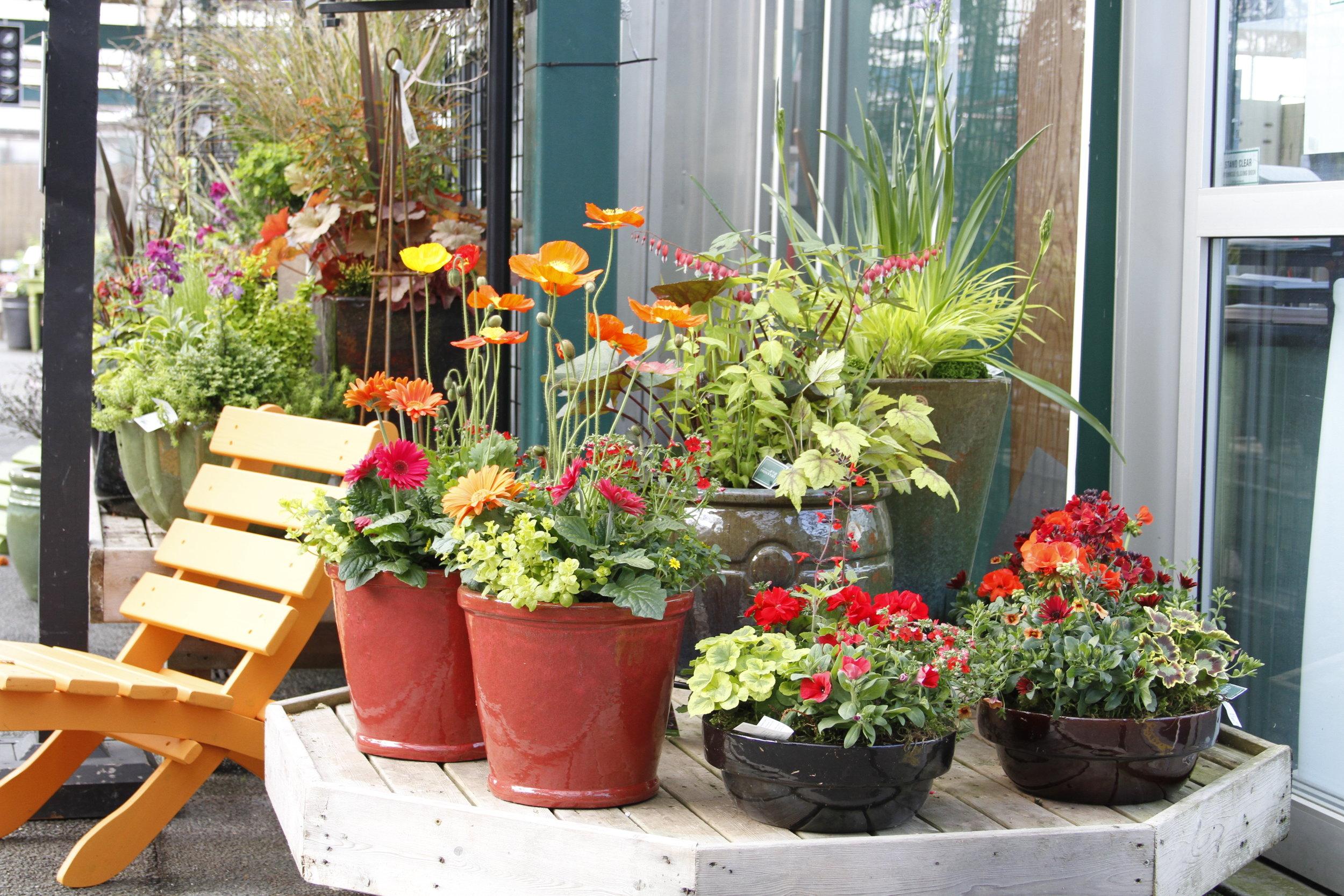 Garden Blog Swansons Nursery Seattles Favorite Garden Store