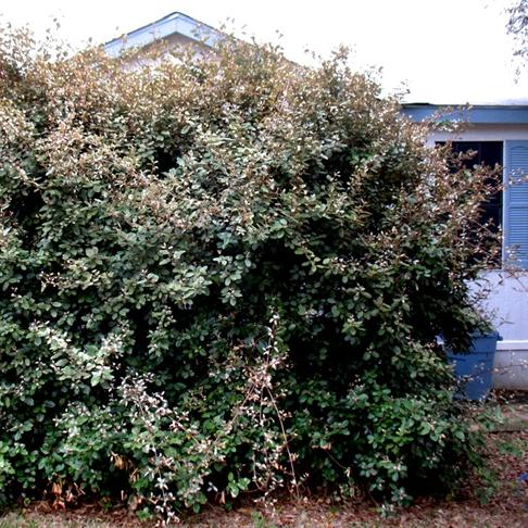 Summer Pruning Tips Swansons Nursery Seattles Favorite Garden