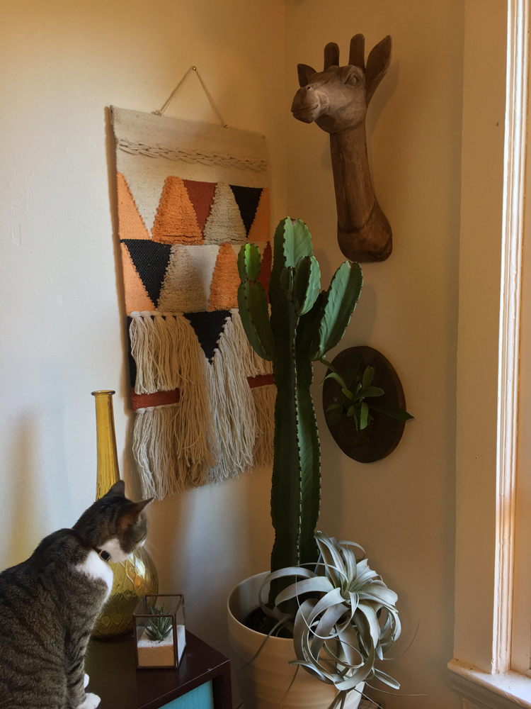 Eugene the Euphorbia looking very cool in my living room along with a wooden giraffe head and woven wall hanger from our gift shop! Plus my cat, busy plotting his attack. Luckily I think Eugene can defend himself.