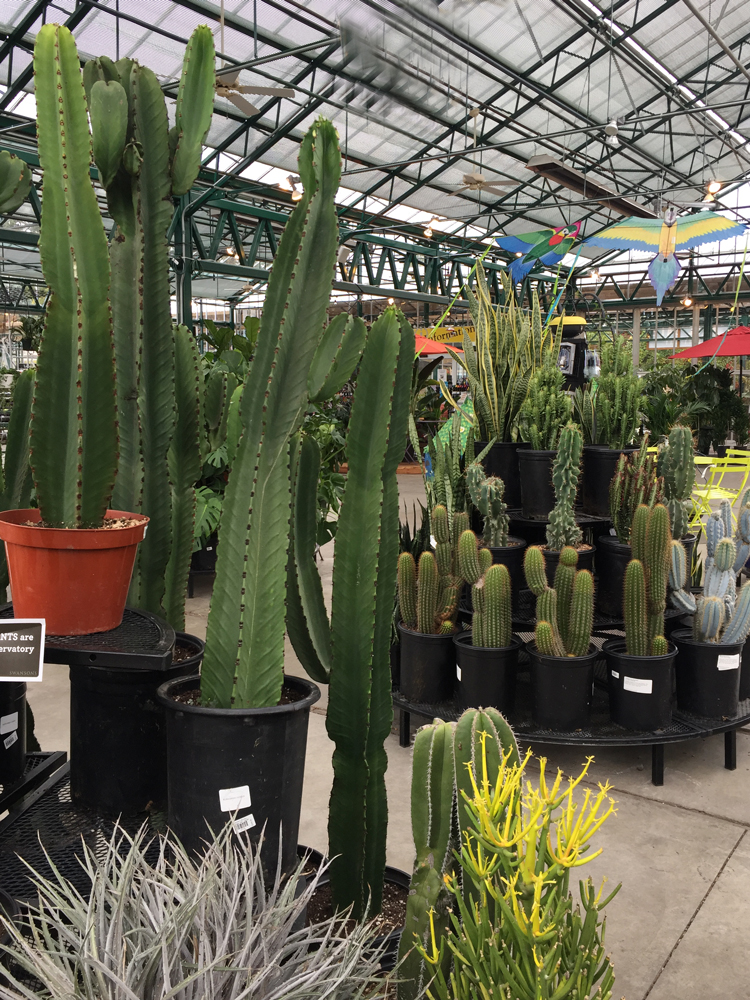Look at all the cool cacti and succulents we have!