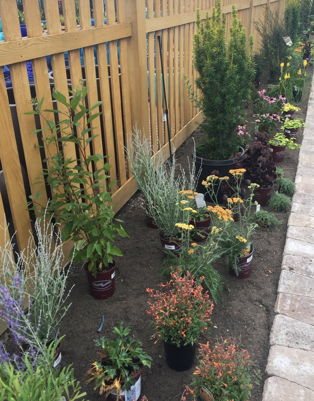 pollinator garden2.JPG