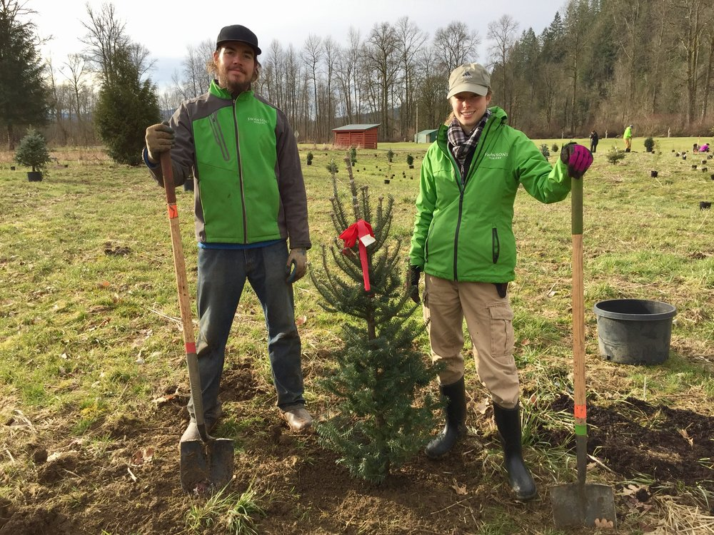 Planting trees with King County Parks