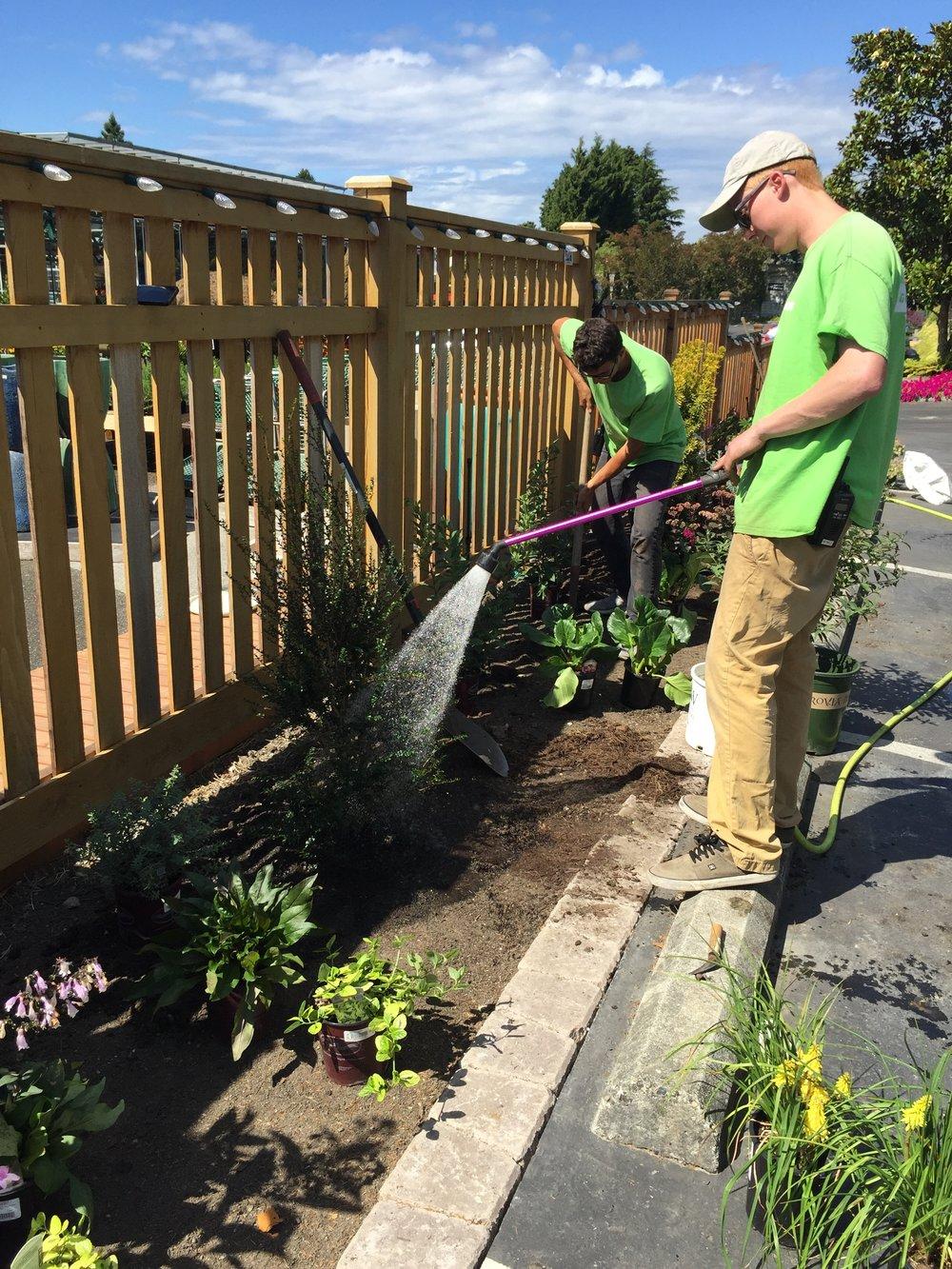 Watering the new Pollinator Garden