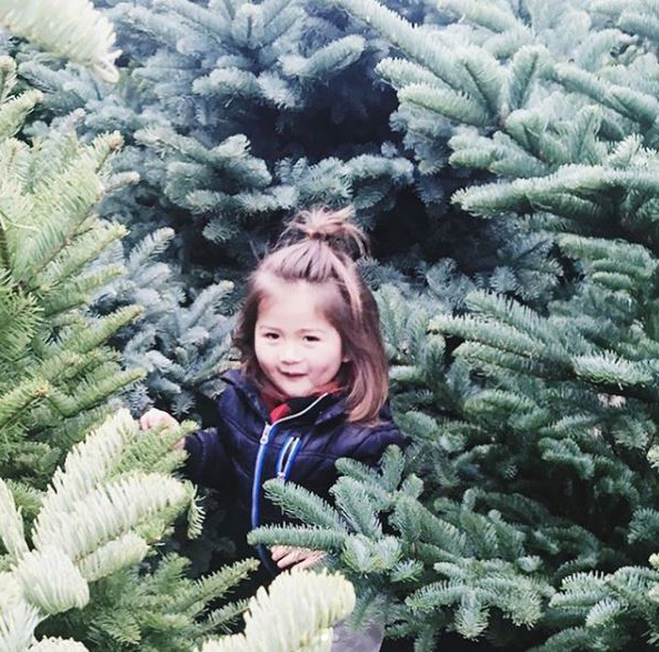 Getting lost in a wonderland of Christmas trees*